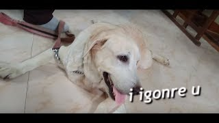 A day in the Veterinary Hospital|Funny Dogs Compilation| Funny Animals|Cute Animals