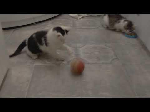 Лионель Месси ⚽ #футбол #месси #котик #борзыйкот