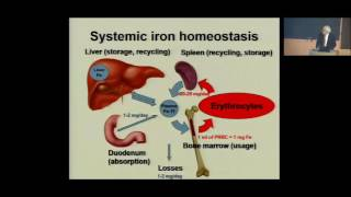 iron homeostasis and its disorders from iron deficiency anemia to hereditary hemochromatosis