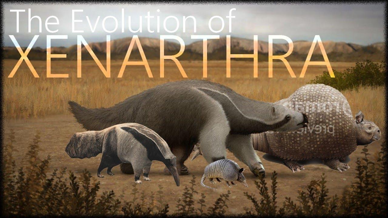 Xenarthra Phylogeny Evolution of Xe...