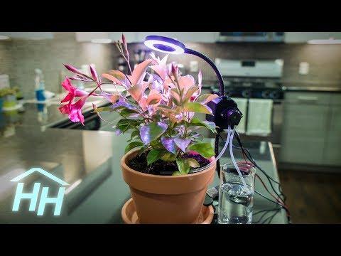 Make a Raspberry Pi Automated Gardener