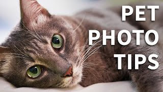 How To Take Better Pet Photos  5 Simple Tips
