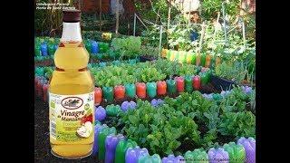 Conheça Vários Benefícios do Vinagre na sua Horta