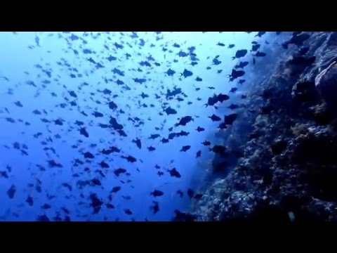 Scuba Diving at Banda Islands