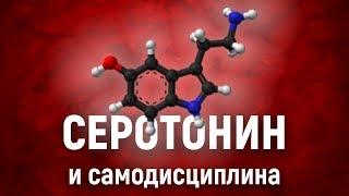 Как серотонин влияет на САМОДИСЦИПЛИНУ. Химия силы воли