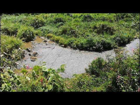 A Rose-Hill, les eaux usées empestent à la rivière Sèche