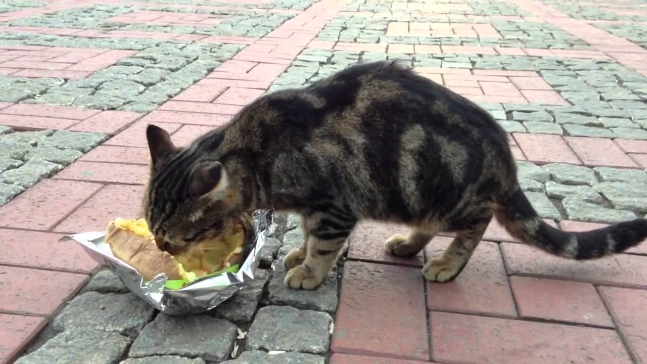 Cats eating baked potatoes in Istanbul
