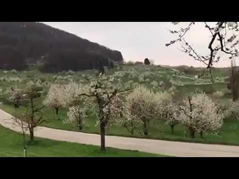 Blossom Basel Land Switzerland 2017