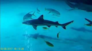 Софья гуляет по Москвариуму)))) Чудесные  рыбы, супер-касатки)