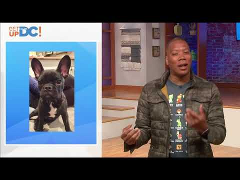 Get @ Reese: Viewers sends pic of dog for Reese