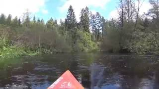 Почти дикие места на реке Оредеж