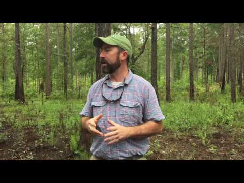 Tour of Longleaf Pine in Talladega National Forest