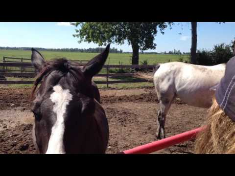 Eyes, Canines and Equines