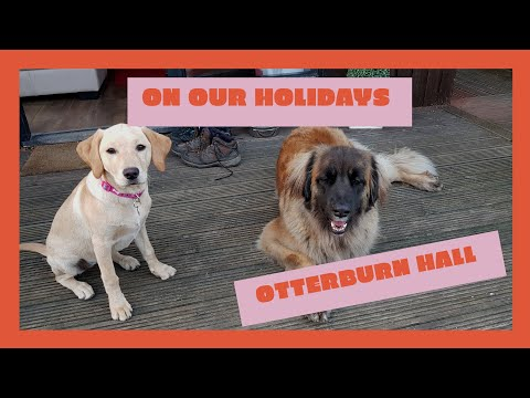 Otterburn hall / leonberger and labrador dogs
