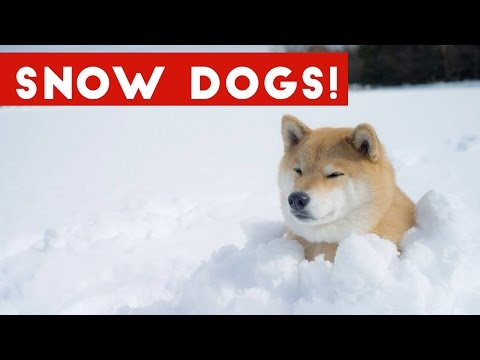 Funniest Snow Dog Video Compilation December 2016   Funny Pet Videos