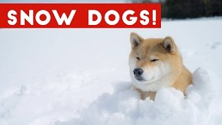 Funniest Snow Dog Video Compilation December 2016 | Funny Pet Videos
