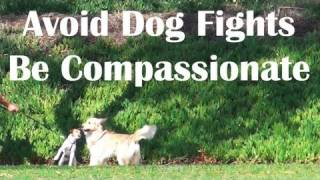 Off Leash Dog Compassion- Dog Training