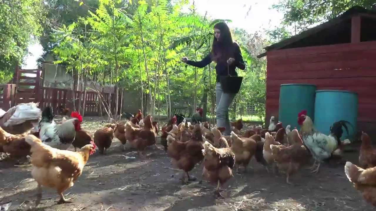 Granja refugio el para so de los animales youtube - Parador de la granja fotos ...