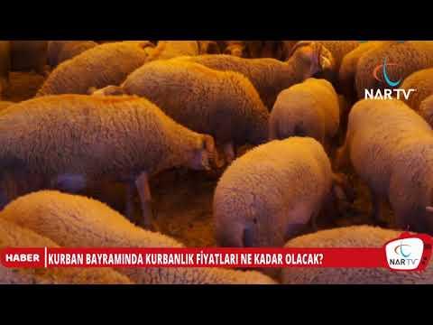 KURBANLIK FİYATLARI BELLİ OLDU...