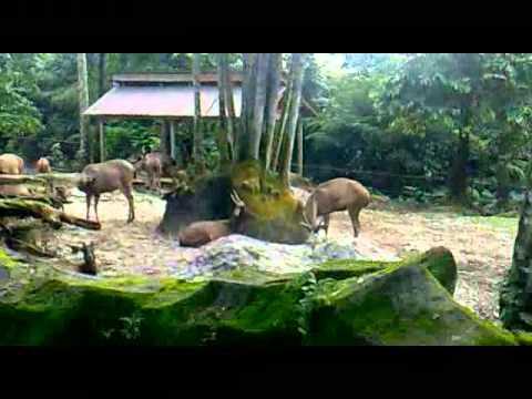 Zoo Taiping, Perak
