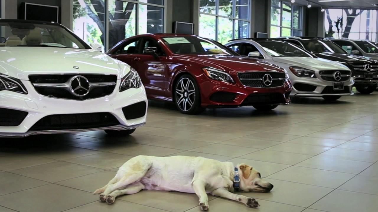 Mercedes Of Austin >> Mercedes Benz Of Austin Dog Friendly Dealership