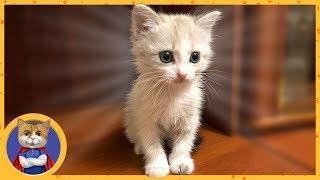 Жизнь спасенного котенка - сироты - Снежинки