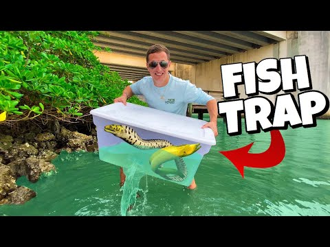 FISH TRAP Catches HYBRID EEL For AQUARIUM!! *Insane*