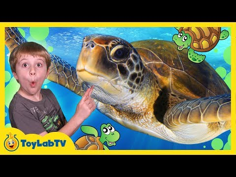 Turtle Rescued from Shark! Aaron visits Turtle Sanctuary in Family Friendly Video for Kids with Toys