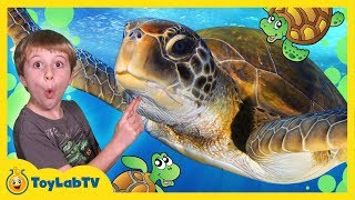 Repeat youtube video TURTLES RESCUED FROM SHARK ATTACK! First Pet Baby Turtle IRL Family Fun Event Kids Video w/ Toys