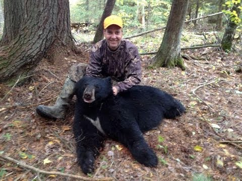 Michigan Black Bear Hunt With Dogs Youtube