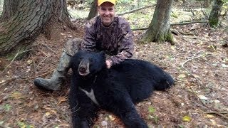 Michigan Black Bear Hunt With Dogs!!!!