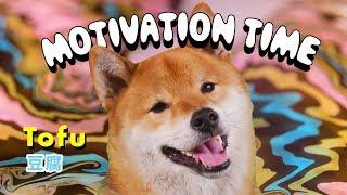 motivation-time-w-tofu-episode-3
