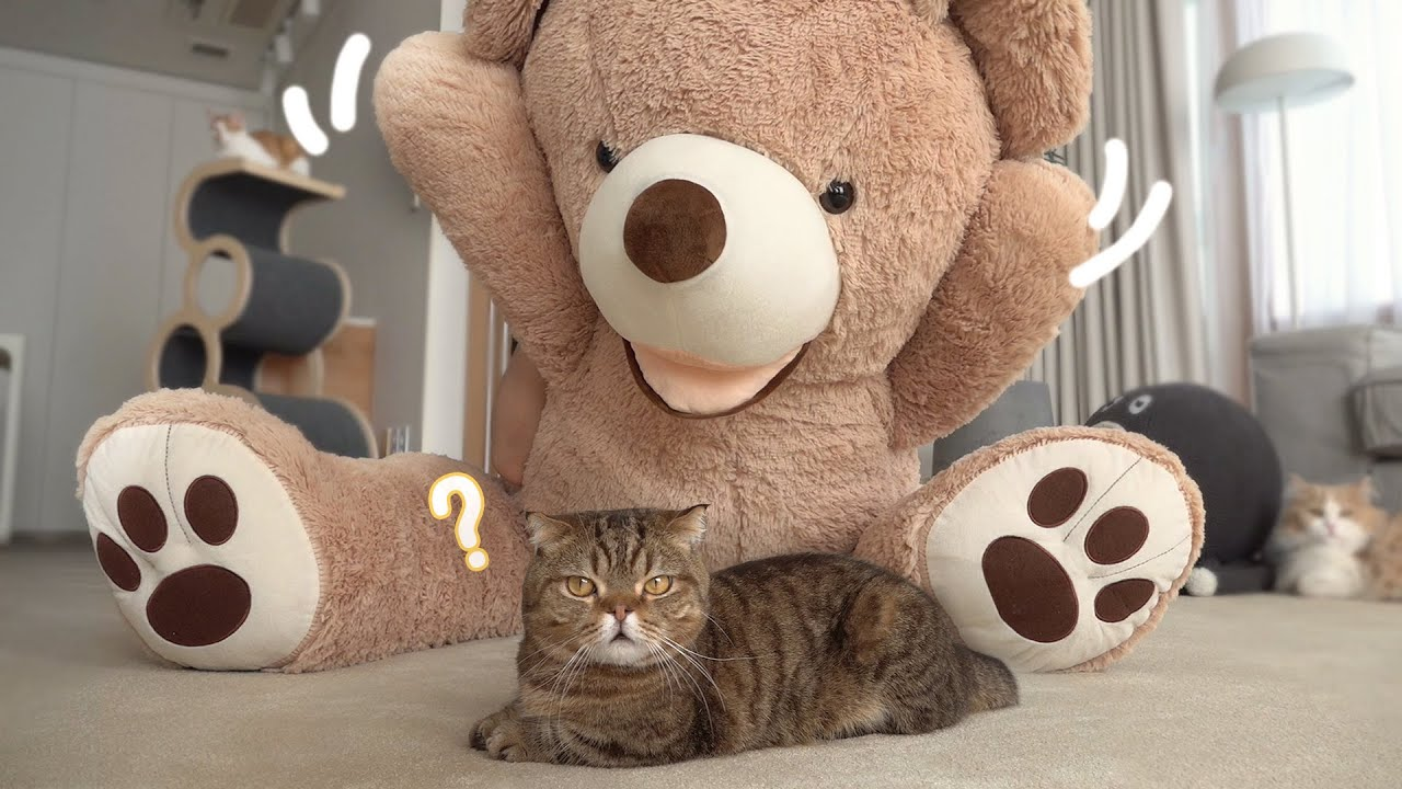고양이들에게 새로운 곰돌이 친구를 소개시켜줬어요!