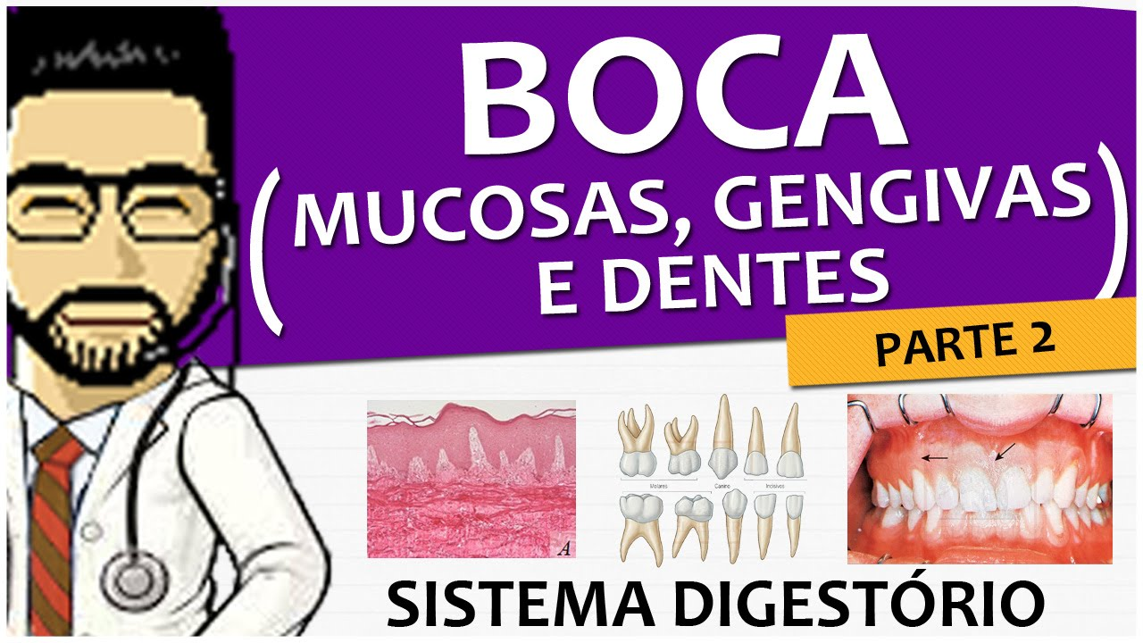 Sistema Digestório 03 - Boca P2 (Mucosas, Gengivas e Dentes ...