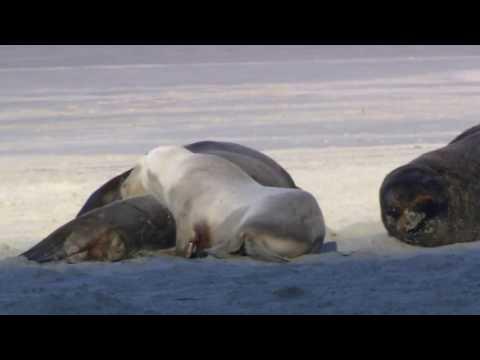 Copie a videoclipului Wildlife