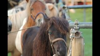 Paardenmarkt Bissingh 2017