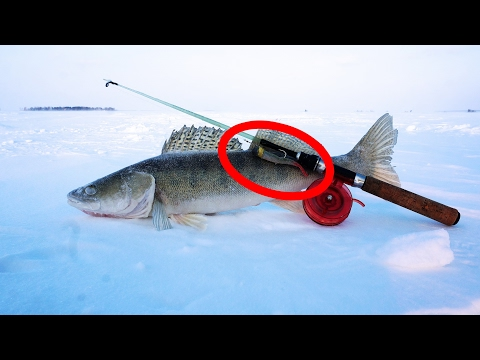 Ловля судака со льда на силикон.  Зимняя рыбалка на водохранилище 2017.