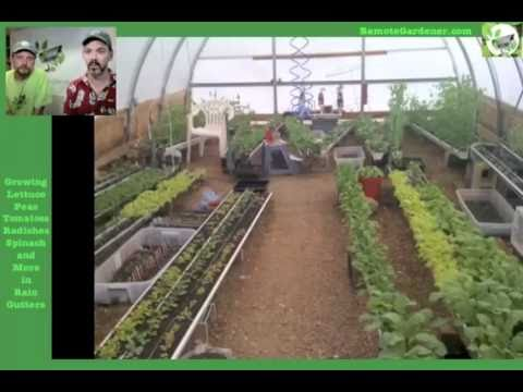 Growing Vegetables In Rain Gutters From Seed To Harvest