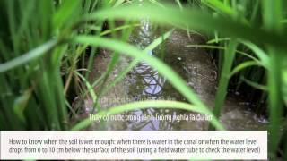 System of Rice Intensification (SRI) (English subtitle)