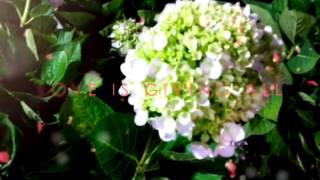 Flowers & garden in vietnam