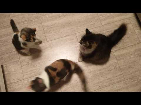 We will sing for tuna!