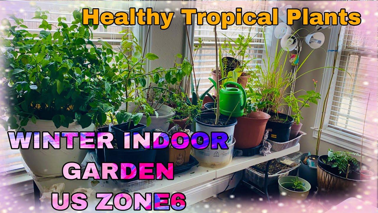Winter Indoor Gardening Tropical Plants Jasmine Tamarind