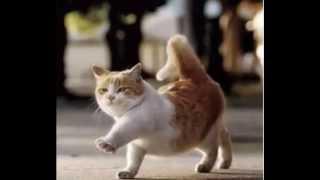 .Кошка беспородная. Автор клипа Светлана О-Ш