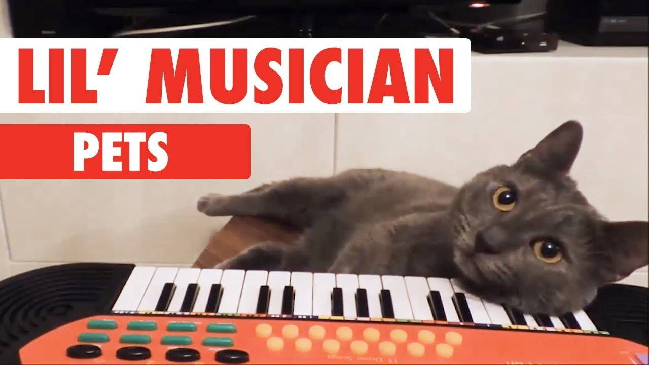Lil Musicians