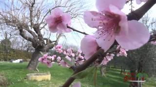 L'arrivo della primavera | Natura in Fiore al Vecchio Gelso