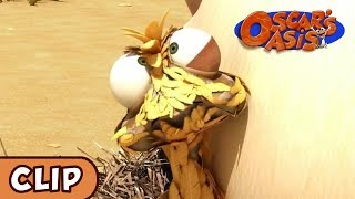 Oscar's Oasis - Mommy Chicken | HQ | Funny Cartoons