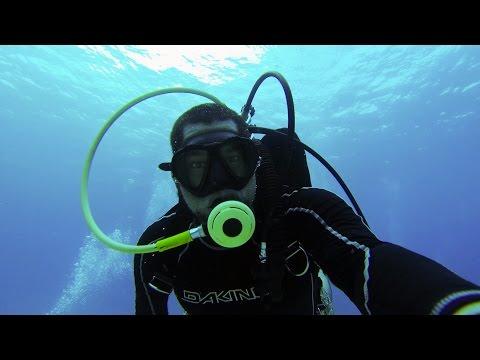 Day At Work: Ichthyologist (Fish Biologist)