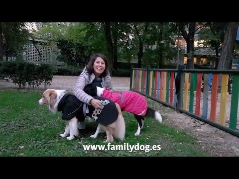 Chubasquero para perros Drizzel Coat Hurtta