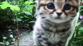 Дикий котёнок черноногой кошки