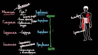 Три типа мышц